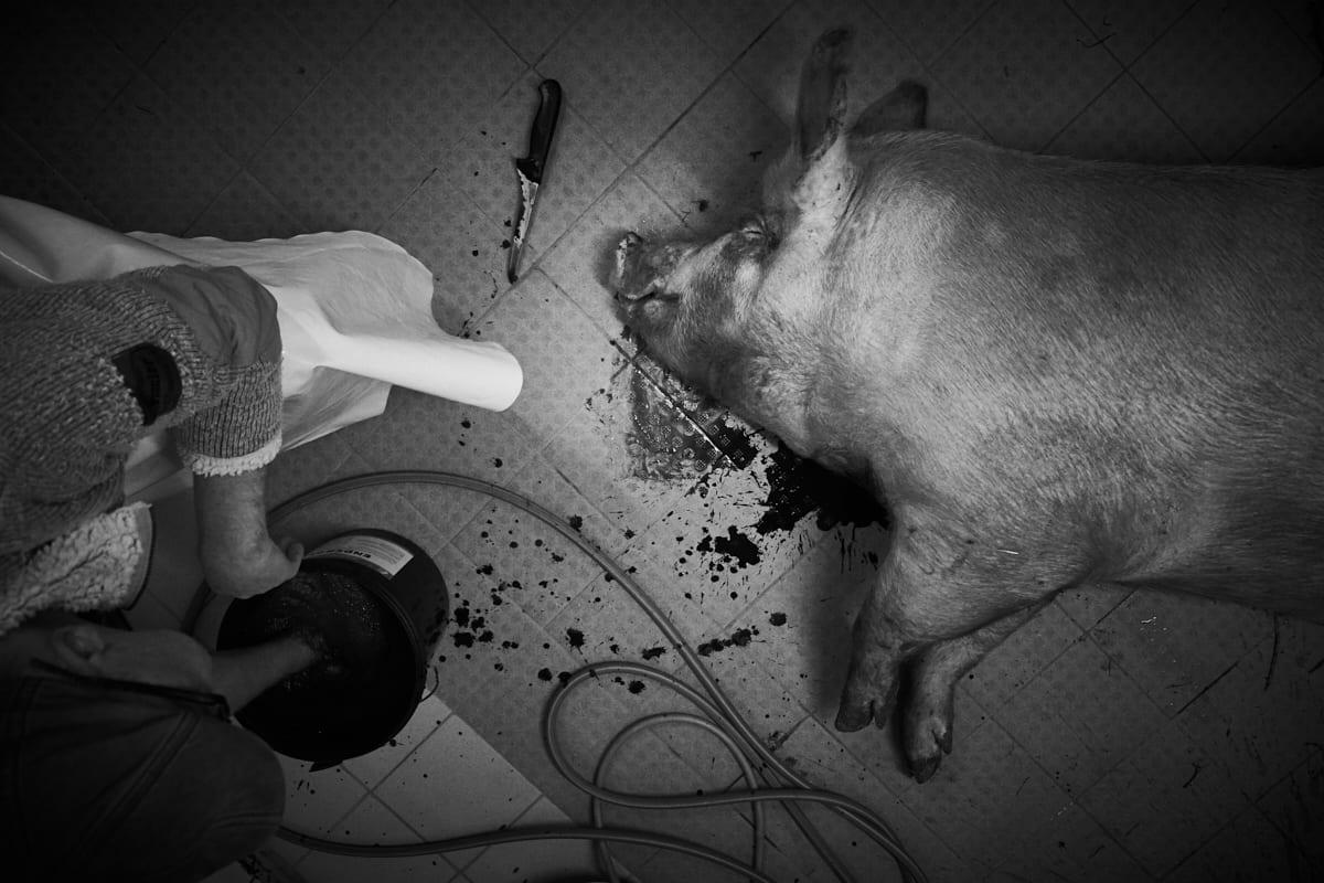 Hausschlachtung – Stich