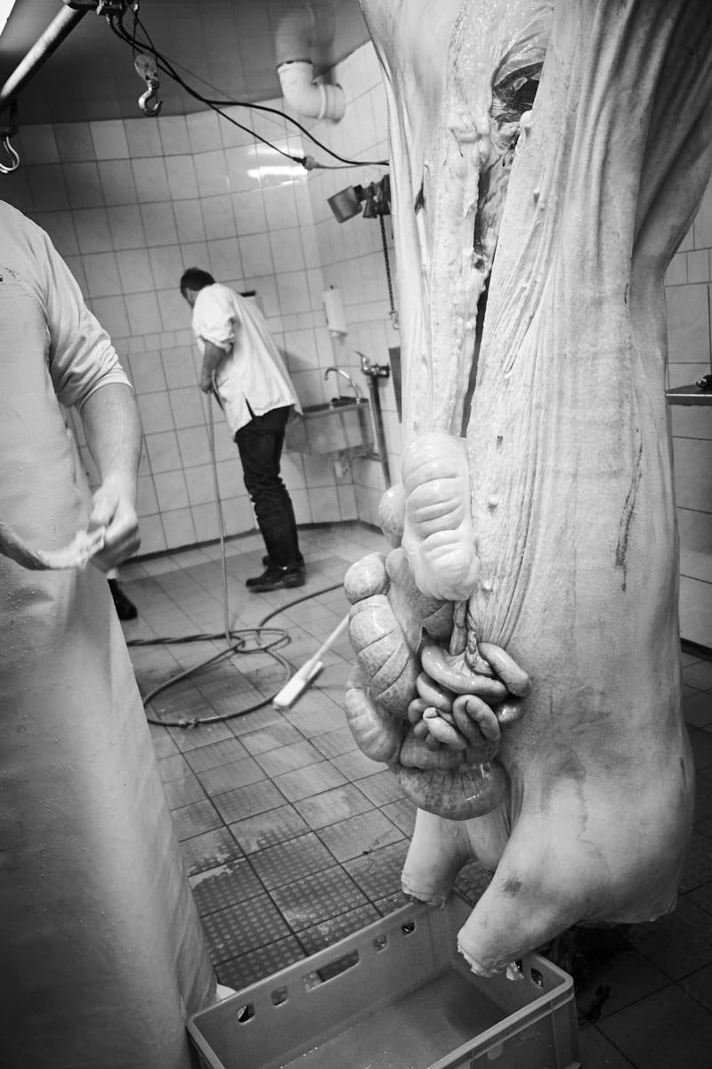 Hausschlachtung_Reportage_Gunnar_Menzel_Fotograf_Muenchen_XT22671